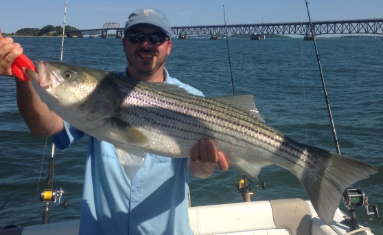 Trolling for striped bass in Boston Harbor