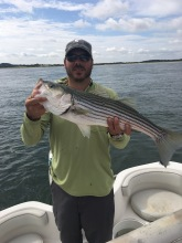 """26"""" North Shore striped bass"""