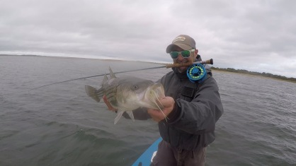 Northshore fall striped bass on the 10w