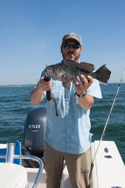 Another Buzzard's Bay Black Sea Bass