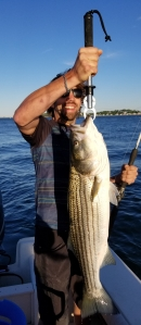 "Nice 35"" striped bass on live mackerel in Boston Harbor"