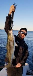 One of many Boston Harbor released keeper sized fish that day!