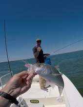 Sight Fishing for Stripers Experience