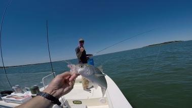 Duxbury Bay Schoolie on the fly