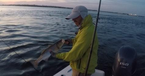 Buzzards Bay Schoolie Striped Bass