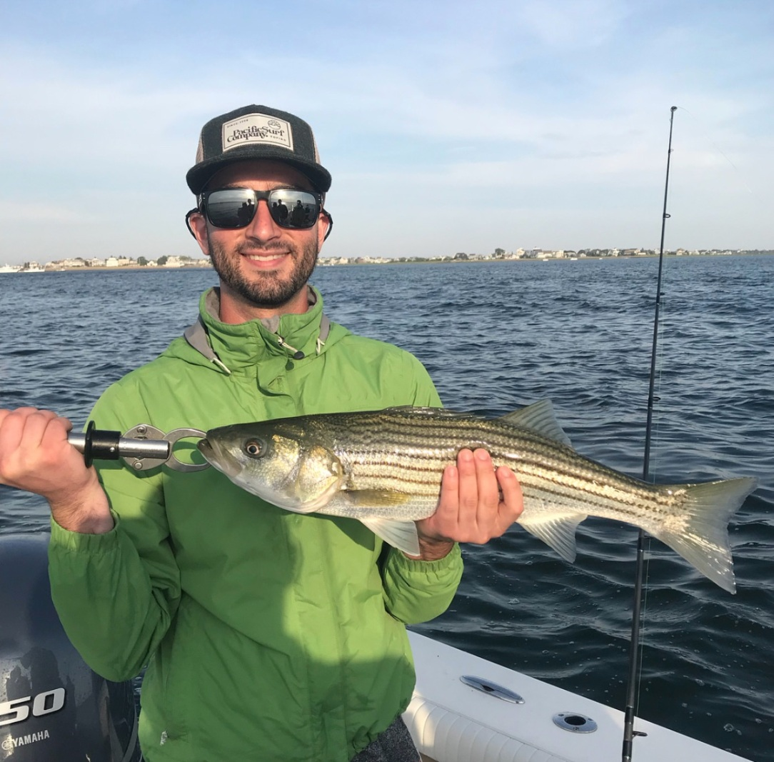 Merrimack River Striped Bass
