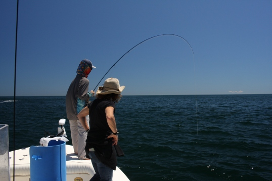 Boston Harbor Striped Bass on the fly
