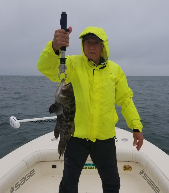 Cape Cod Black Sea Bass in the rips