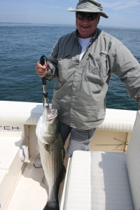 "46"" Striped Bass in Boston Harbor"