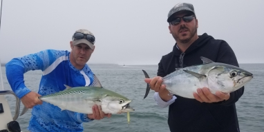Doubled up several times on Martha's Vineyard Albies