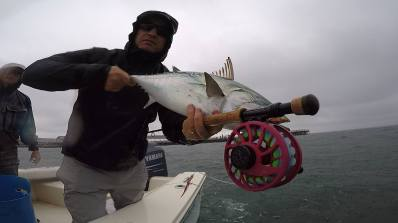 Nautilus Fly Reel Owner Kristen putting in work on some Martha's Vineyard Albies on the Fly