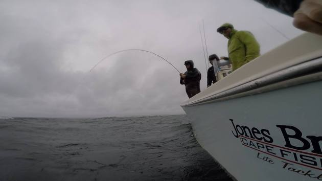 Hooked up on a Cape Cod Albie on the Fly