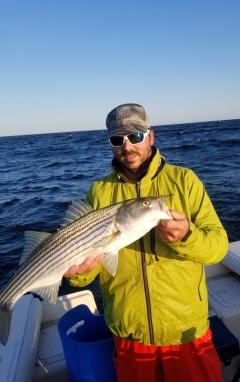Cape Cod Bay Striped Bass