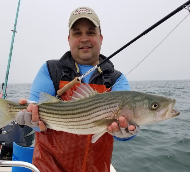 Stripers in the rips on the fly